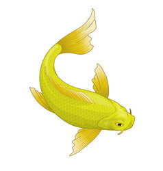 Japans koi fish in yellow color vector