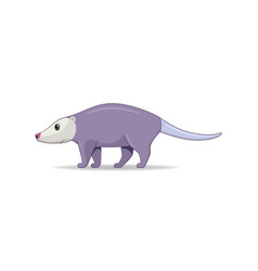 Opossum animal standing on a white background vector