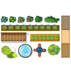 Top view plants and pond in garden vector