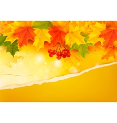 Autumn background with colorful leaves and ripped vector image