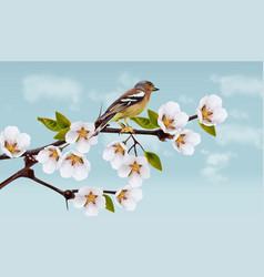 Cherry flowers border spring blossom holiday vector