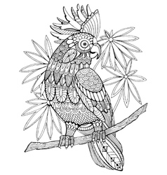 Cockatoo parrot coloring book for adults vector image