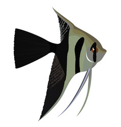Halfback veil angelfish cartoon aquarium fish vector