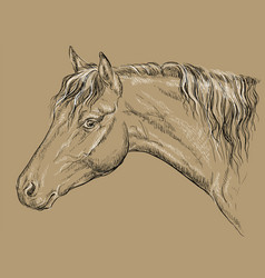 Horse portrait-11 on brown background vector