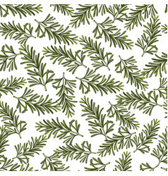 rosemary hand drawn branches seamless pattern vector image