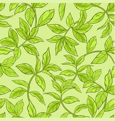 Tea leaves seamless pattern vector