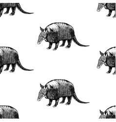 hand drawn background with armadillo vector image