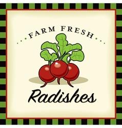 Farm Fresh Radishes vector image