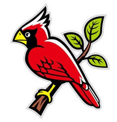 cardinal bird on a tree branch vector image