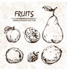 digital detailed fruit hand drawn vector image