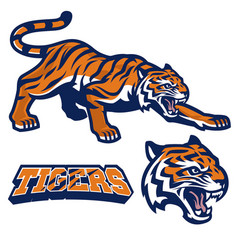 mascot tiger crouching in set vector image vector image