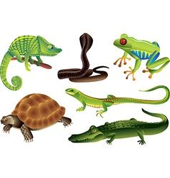 reptiles amphibia vector image