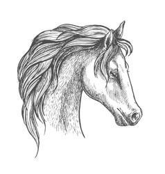 Arabian horse head sketch for equestrian design vector image