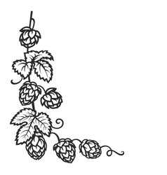 branch hops hop cones with leaf icon corner vector image