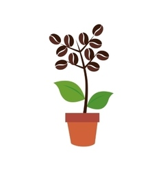 Coffee plant organic product vector