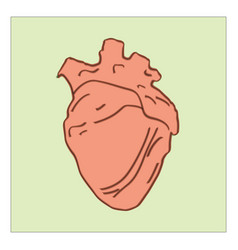 realistic heart on white background vector image