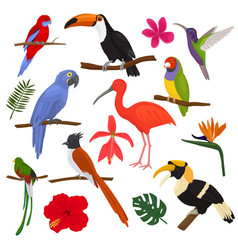 tropical birds exotic parrot toucan and vector image