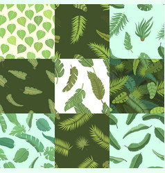 tropical leaves green exotic jungle palm vector image