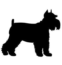 Schnauzer Silhouette vector image vector image