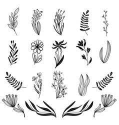 Flower set herbarium beautiful design element vector