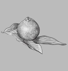 Grey fruit-4 vector