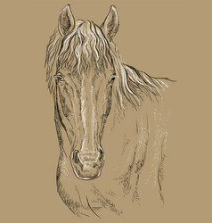 Horse portrait-14 on brown background vector