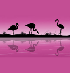 Lake scenery flamingo silhouette at sunset vector