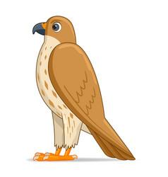 saker falcon bird on a white background vector image