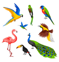 set tropical exotic birds vector image