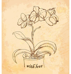 Vintage old background with orchid with love Hand vector image