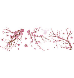 floral watercolor elements with sakura flowers vector image