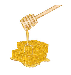 Hand drawn set of honeycomb with honey stick vector
