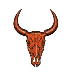 red hand-drawn buffalo skull isolated on white vector image