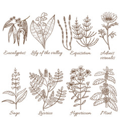set of medicinal plants in hand drawn style vector image