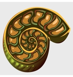 The ancient Ammonite vector