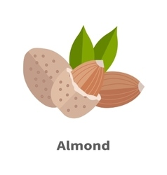 Almond Nuts in Flat Design vector image vector image