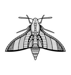 moth hand drawn vector image
