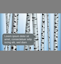 spting shape birch white and vector image