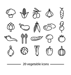 vegetable line icons vector image