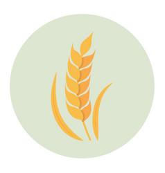 wheat flat icon vector image