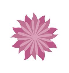 flower aster decoration image vector image