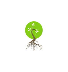 plant abstract ecology logo vector image