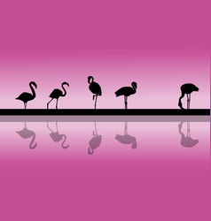 flamingo lined at sunset scenery silhouettes vector image