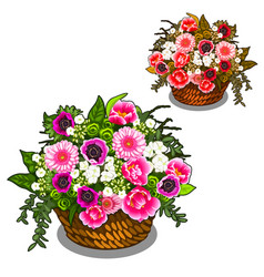 beautiful basket pink and white flowers vector image