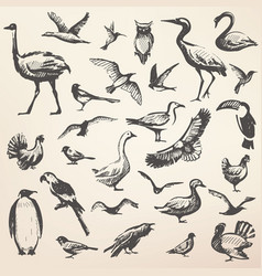 birds big hand drawn collection silhouettes vector image
