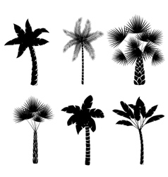 Decorative palm trees collection vector