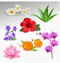 Flowers plants realistic icons collection vector