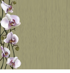 Green background with white orchid flowers vector