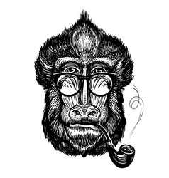 hand-drawn portrait funny monkey with glasses vector image