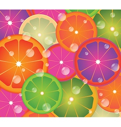 Lime circles vector image